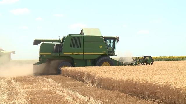 U mačvanskom kraju rod  pšenice veći od očekivanog