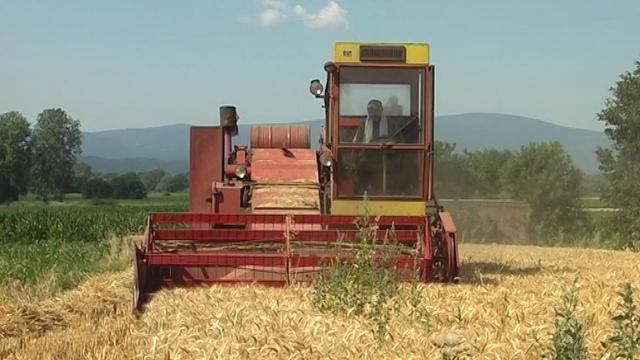 Rekordni prinosi pšenice i ječma u Južnom Pomoravlju