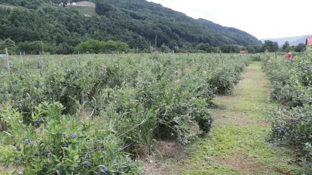 Ulaganja 50.000 - 60.000 evra po hektaru