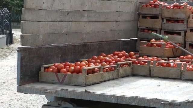 Cena crvenog paradajza u otkupu i dalje je niska