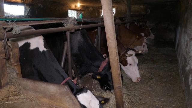 Problemi najizraženiji u sektoru mleka i mesa