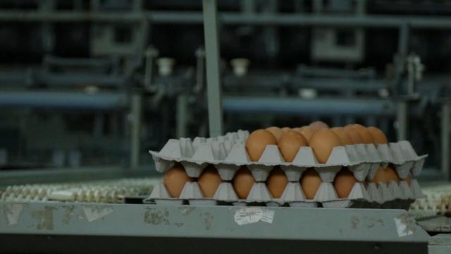 Sve teži plasman konzumnih jaja